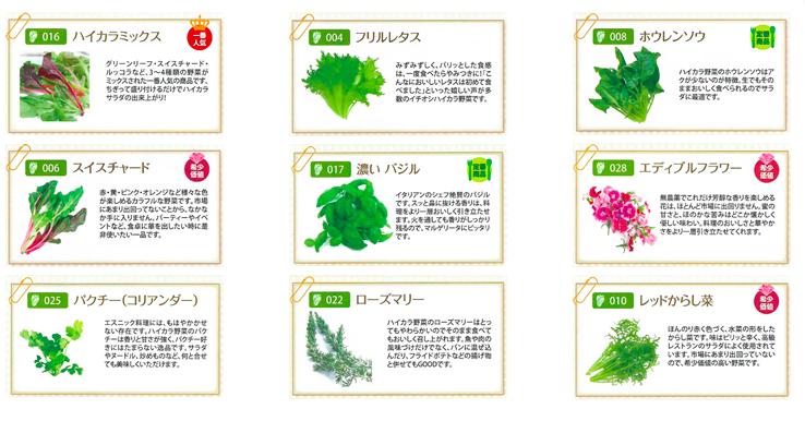 栽培品目一例|アグリ王のハイカラ野菜